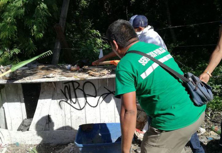 Se ha logrado avanzar en la limpieza de las calles de Tulum con el apoyo de seis volquetes. (Sara Cauich/SIPSE)