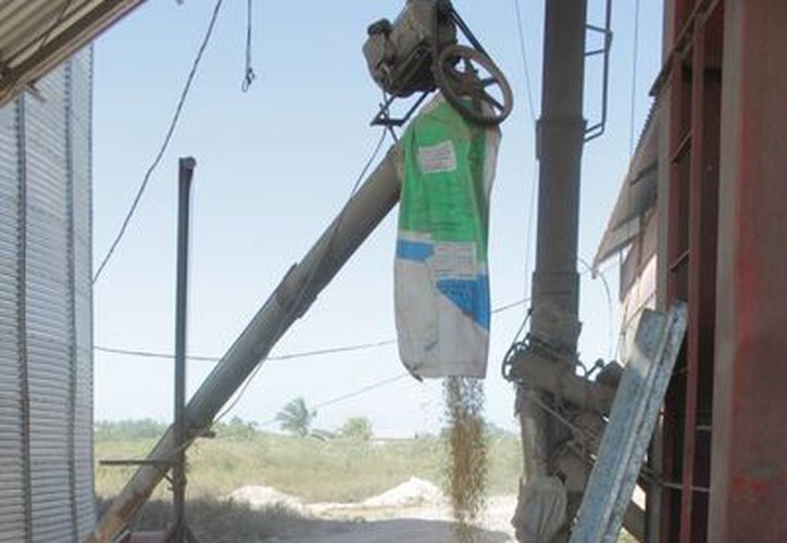 El año pasado la producción de soya presentó una pérdida de siete mil 500 toneladas. (Edgardo Rodríguez/SIPSE)