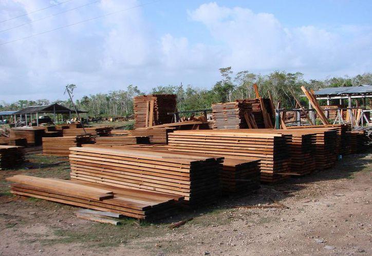 Las exportaciones son en el sector forestal como madera, chicle y miel. (Victoria González/SIPSE)