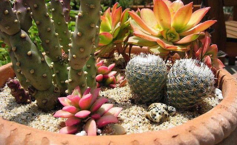 El jardín botánico del CICY cuenta con una gran colección. (Milenio Novedades)