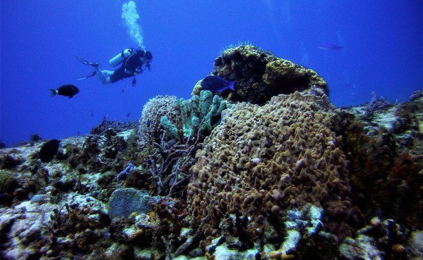 El Parque Marino Arrecifes de Cozumel generó recursos económicos a la Federación. (Gustavo Villegas/SIPSE)