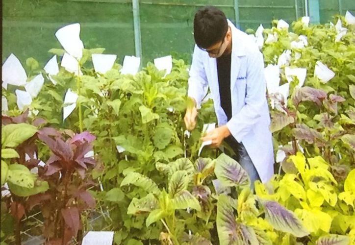 Taiwán ha distribuido más de 600 mil muestras de semillas a más de 180 países. (Notimex)