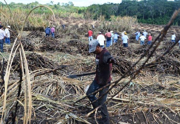 Debido a que desde el inicio de la molienda se registraron lluvias inusuales que pararon la actividad, muchos cortadores de caña foráneos cancelaron contratos. (Edgardo Rodríguez/SIPSE)