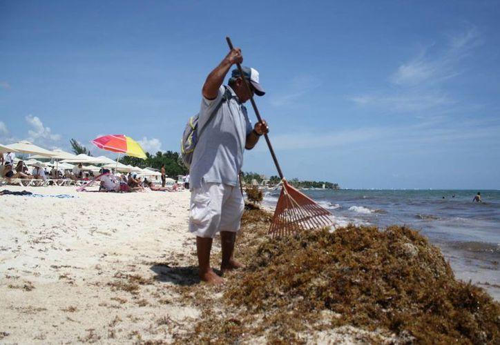 La Zofemat prevé ampliar su presupuesto para contratar a más personal para limpiar las playas. (Octavio Martínez/SIPSE)