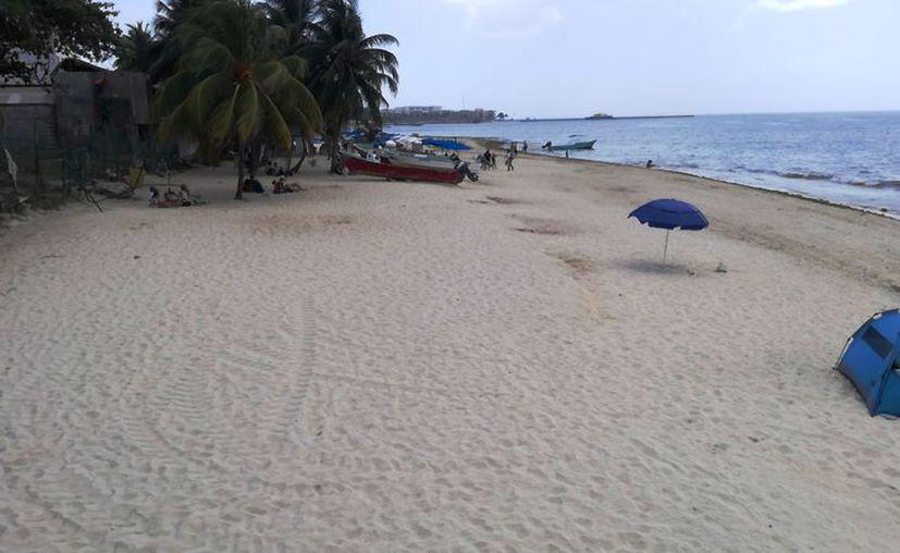 Las playas de Solidaridad registraron arribo moderado de sargazo. (Octavio Martínez/SIPSE)