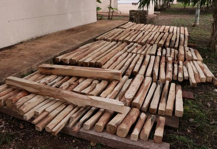 En Yucatán, además de cedro y caoba, ya se siembra teca. (Jorge Acosta/Milenio Novedades)