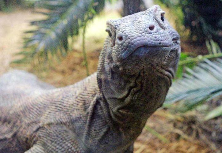 La empleada del zoológico de Omaha tuvo que ser hospitalizada por la mordida del dragón de Komodo. (ABC11.com)
