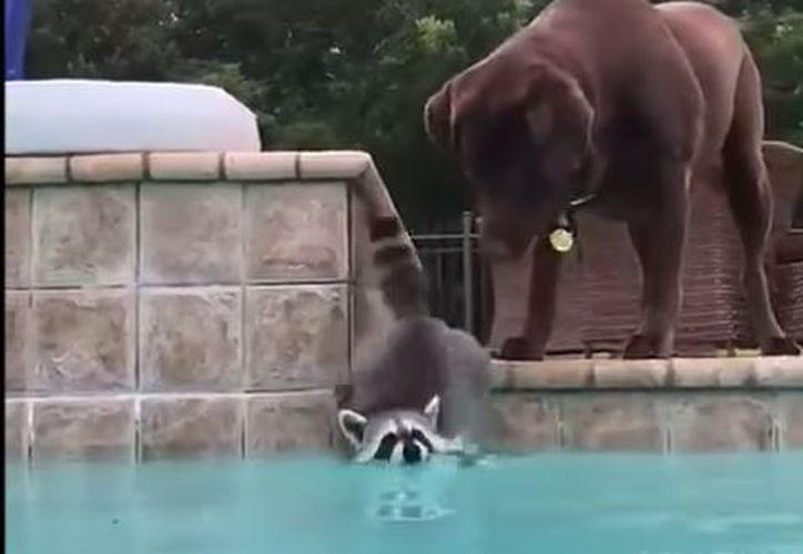 El video divertido pone de manifiesto que los animales pueden ser buenos amigos. (Foto: YouTube)