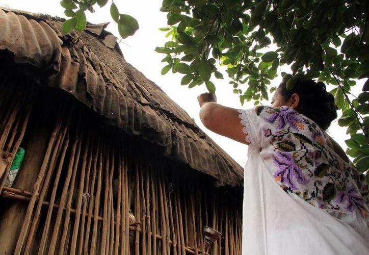 La población maya en el sur de la entidad es 50% mayahablante. (Milenio Novedades)