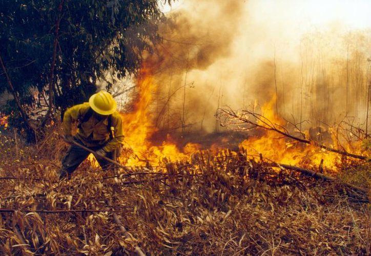 Incendios activos en la Zona Norte en los Municipios de Lázaro Cárdenas, Tulum y Benito Juárez. (Contexto/Internet)