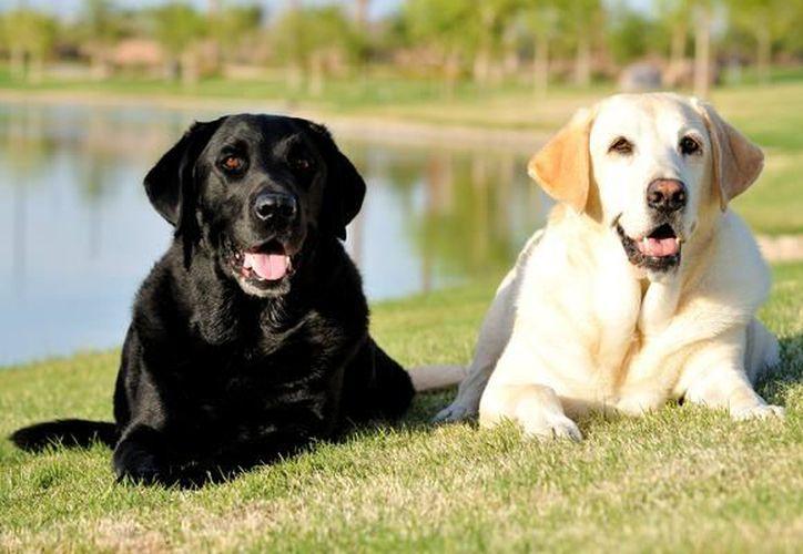 Muchos de los perros que se roban en la ciudad terminan siendo vendidos en el mercado negro. (Foto: Contexto/Internet)