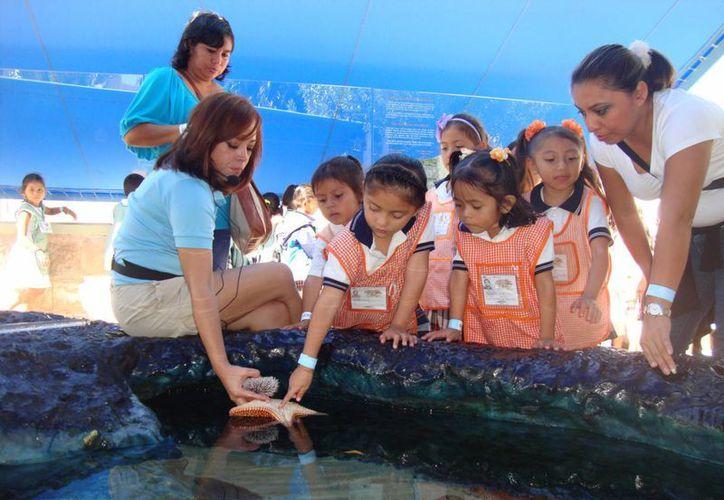 En los recorridos conocen los diferentes tipos de vida marina. (Cortesía/Acuario Interactivo)
