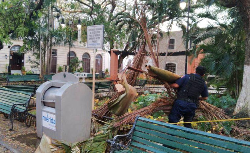 Los agentes retiraron árboles. (Novedades Yucatán)