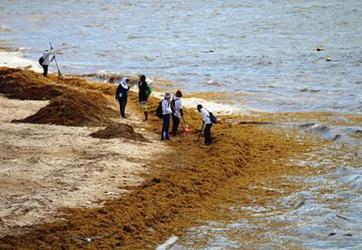 El arribo de sargazo ha dado mala imagen a Playa del Carmen, ha bajado un 35 por ciento la renta de hoteles. (Foto: Octavio Martínez/SIPSE)