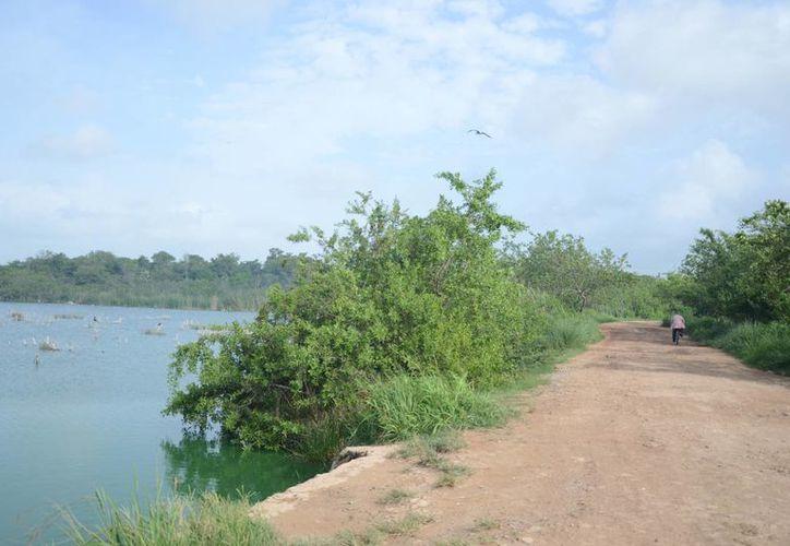 Investigan el problema de relleno que ha sufrido una parte de la laguna conocida como la sabana de Chetumal. (Gerardo Amaro/SIPSE)