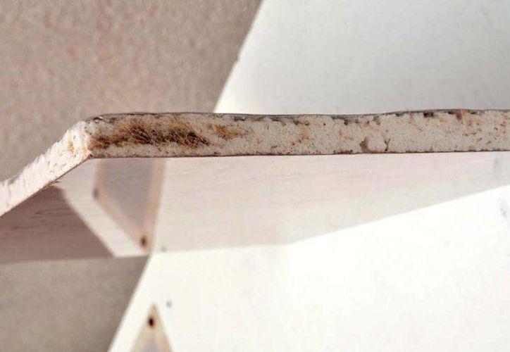 Los residuos de la planta del agave, que generalmente van a la basura, pueden ser aprovechados para fabricar material de construcción más ligero y resistente. (udg.mx)