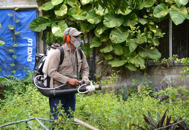 Refuerzan estrategias para eliminar criaderos de moscos en Quintana Roo. (Foto: David de la Fuente)