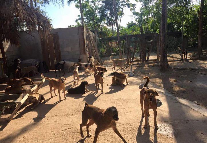 Tierra de Animales se inauguró en 2011, y desde entonces se ha encargado de cuidar a cientos de animales desamparados. (Facebook)