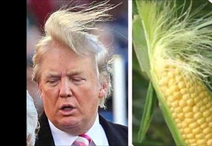 Los memes de Donald Trump son el pan de cada día desde que ganó la Presidencia de EU. (Twitter)