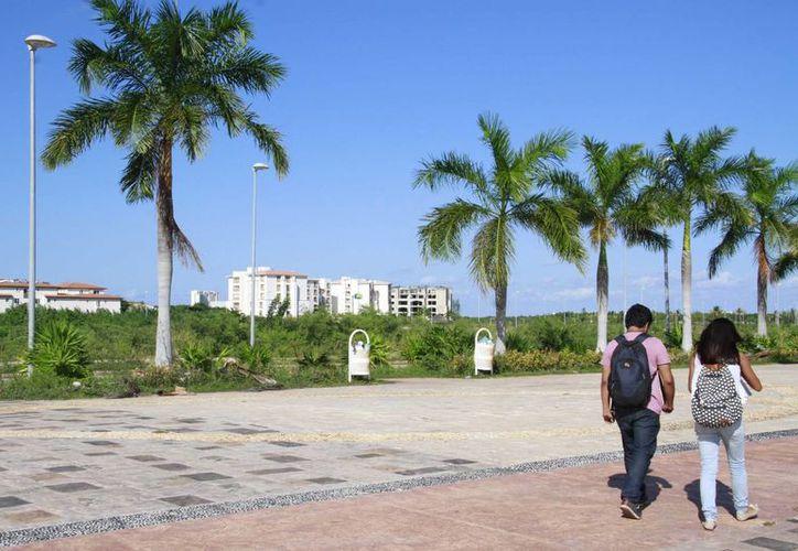 Ambientalistas promueven medidas judiciales para proteger la flora y fauna de Tajamar. (Tomás Álvarez/SIPSE)
