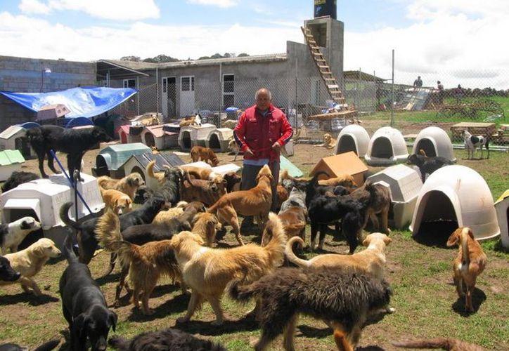 La amenaza del impuesto ya ha encarecido el precio del alimento para perros, aseguran defensores de animales. (Facebook oficial)
