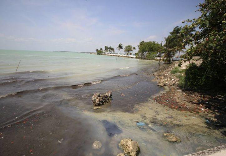 Estudios realizador por el Ecosur confirmaron la presencia de contaminantes. (Harold Alcocer/SIPSE)