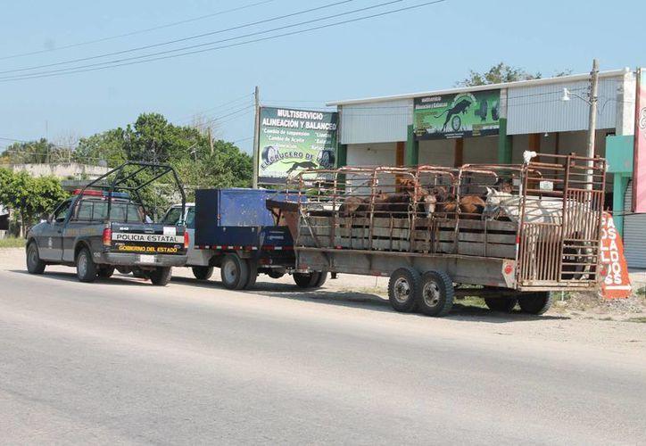 Alrededor de 70 animales son sustraídos al mes en la zona sur. (Archivo/SIPSE)