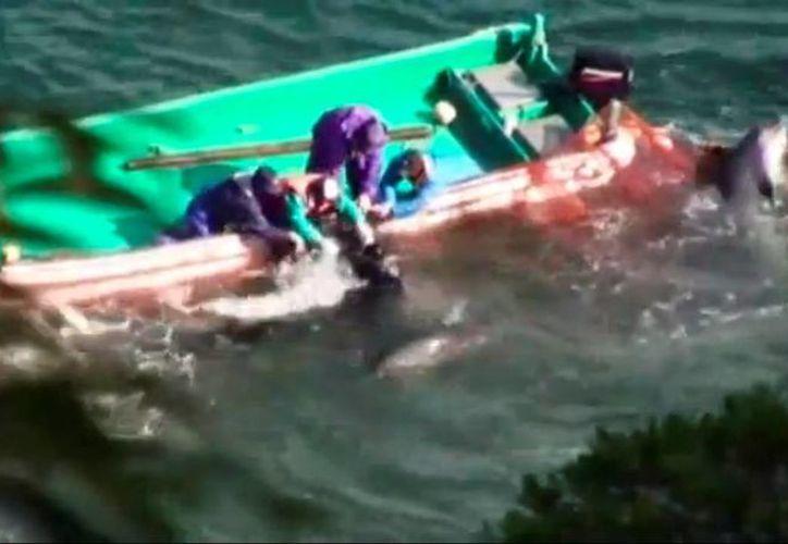 Cerca de 500 delfines fueron cercados con redes en la bahía y ultimados con cuchillos y arpones. (Captura de pantalla)