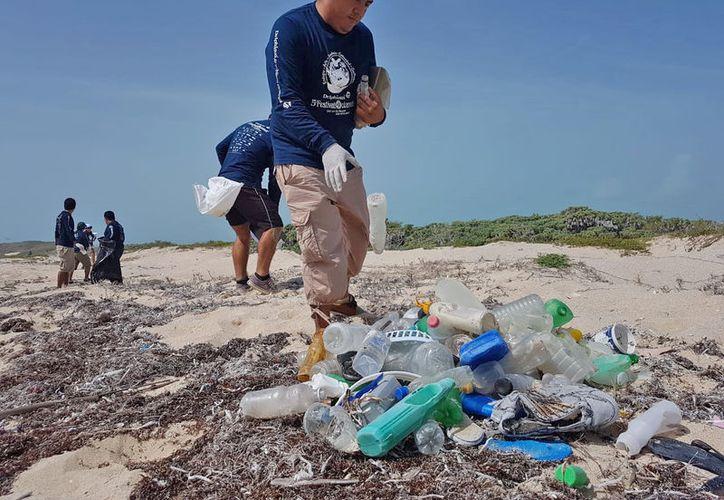 En puntos específicos de las playas de Puerto Morelos las tortugas hacen su arribo para desovar. (Foto: Cortesía).