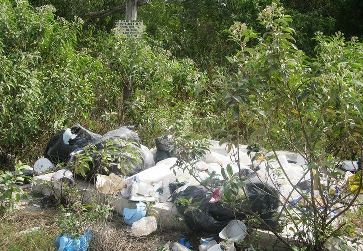 Piden a los habitantes no tirar basura en áreas verdes. (Rossy López/SIPSE)