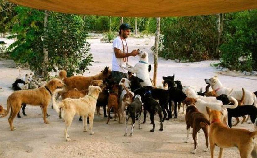 Los donativos recibidos, contribuirán al cuidado de los 250 perros que se encuentran en el refugio. (tierradeanimales.org)