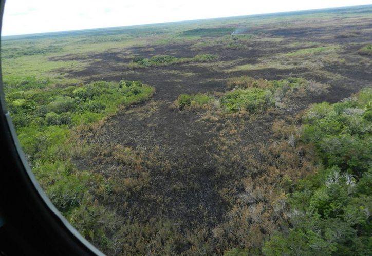 Un tercer incendio importante en pocos días acabó con 50 hectáreas en una zona de acceso al puerto de Sisal. (SIPSE)