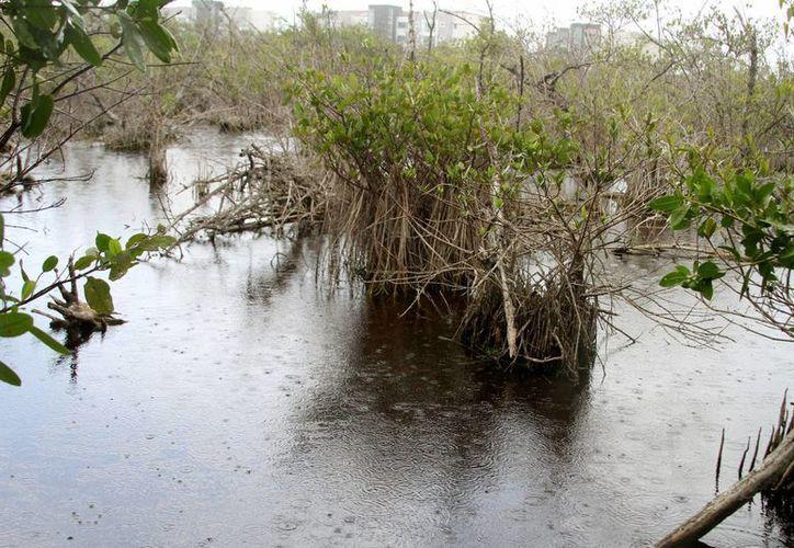La Profepa investiga la tala ilegal de manglar para la construcción de un campo de golf así como la destrucción de dunas en Punta Maroma.  (Carlos Calzado/SIPSE)