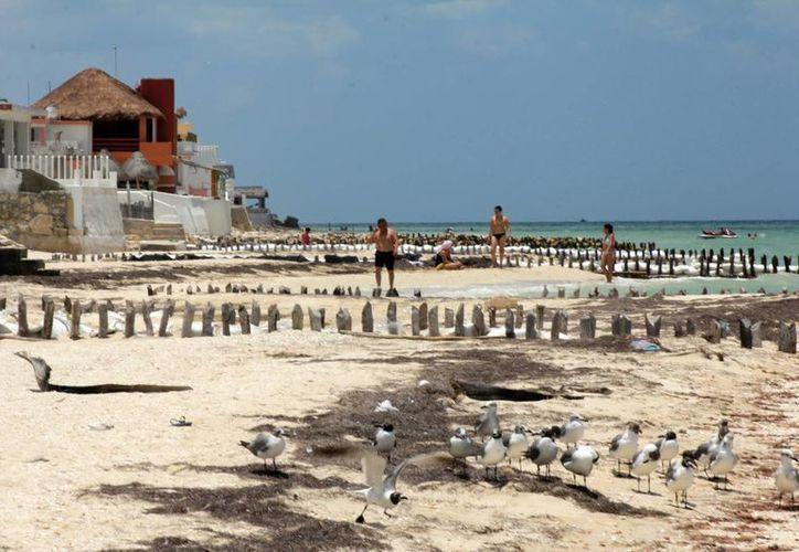 Investigador señala que se deben hacer estudios en la costa. (Milenio Novedades)