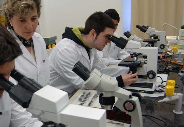 Hay más de 500 biólogos distribuidos en la entidad. (Israel Leal/SIPSE)