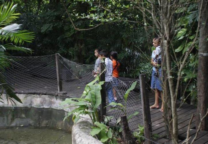 Escuelas beliceñas se interesan por el zoológico de Chetumal. (Harold Alcocer/SIPSE)