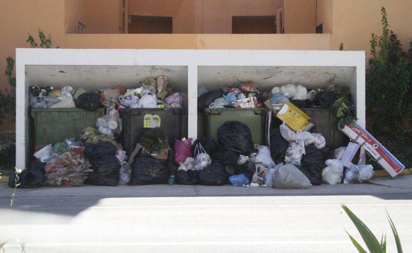 Los desechos son removidos por jauría de perros callejeros. (Loana Segovia/SISE)