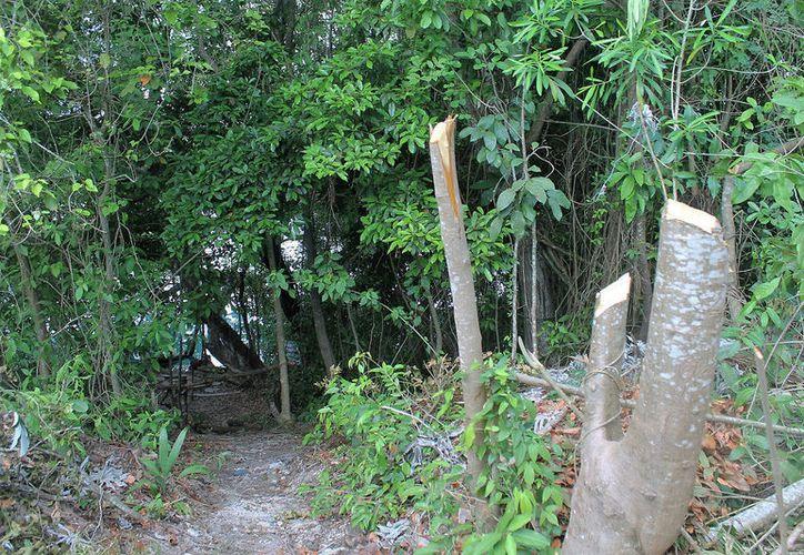 Ejidatarios lamentaron que a pesar de que el manglar esté protegido por la Semarnat, no actúen para protegerlo. (Javier Ortiz/SIPSE)