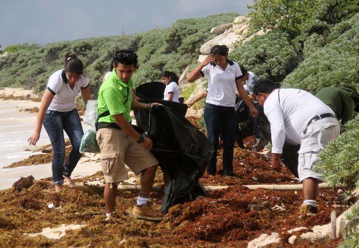 Estudiantes realizan acciones a favor del medio ambiente. (Cortesía/SIPSE)