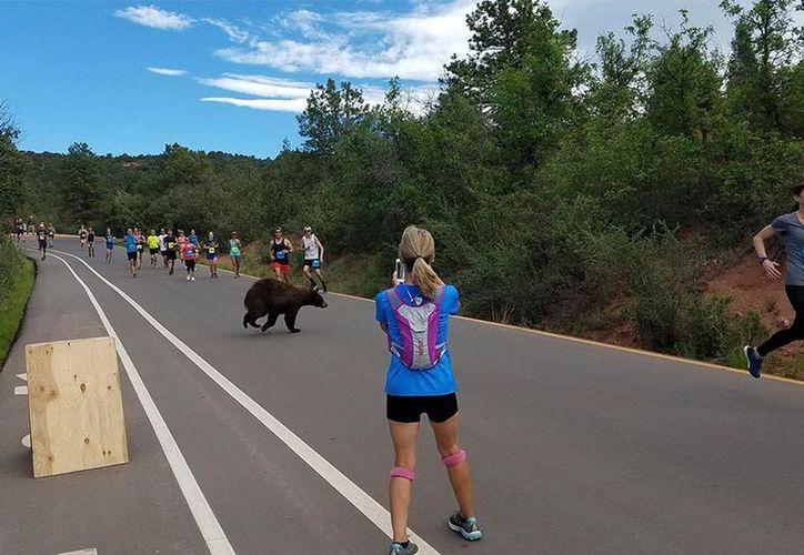 El animal parecía intentar decidir cuándo atravesar el camino repleto de corredores. (Foto: Excélsior)