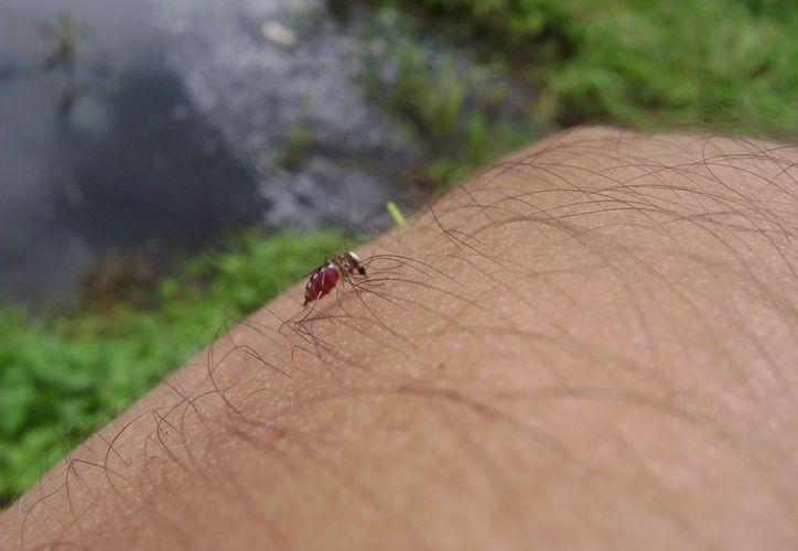 Existe una vacuna muy eficaz para prevenir la enfermedad. (Foto: David de la Fuente)