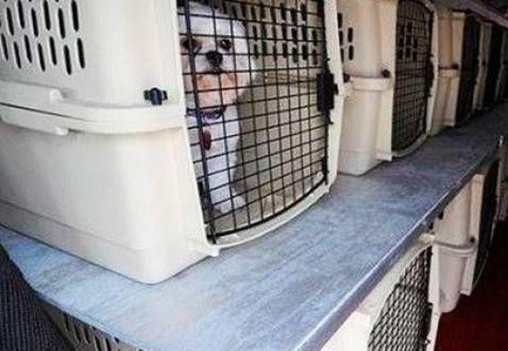 No todas las aerolíneas permiten viajar con mascotas; para ingresarlas a México se deben seguir ciertos requisitos. (Contexto/Internet)