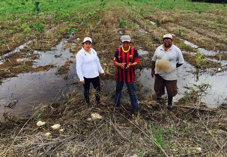 Impulsan el campo en Quintana Roo. (SIPSE)