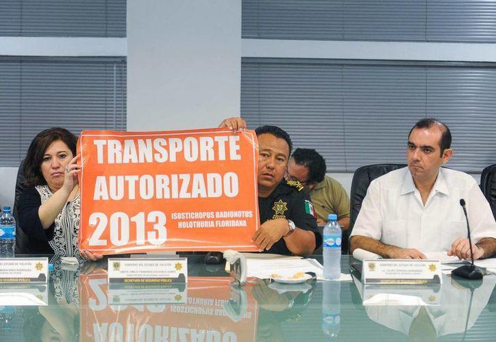 Felipe Cervera muestra una de las calcomanías oficiales que llevarán los vehículos autorizados al transporte de pepino de mar. (Cortesía)