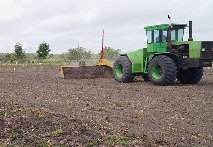 La actividad apícola es una de las preponderantes en el noreste del municipio de Bacalar. (Javier Ortiz/SIPSE).