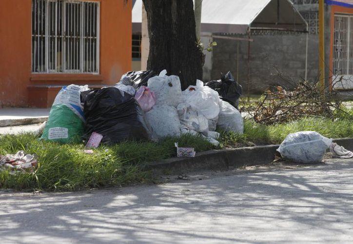 El problema de la basura es uno de los más recurrentes en la capital. (Harold Alcocer/SIPSE)