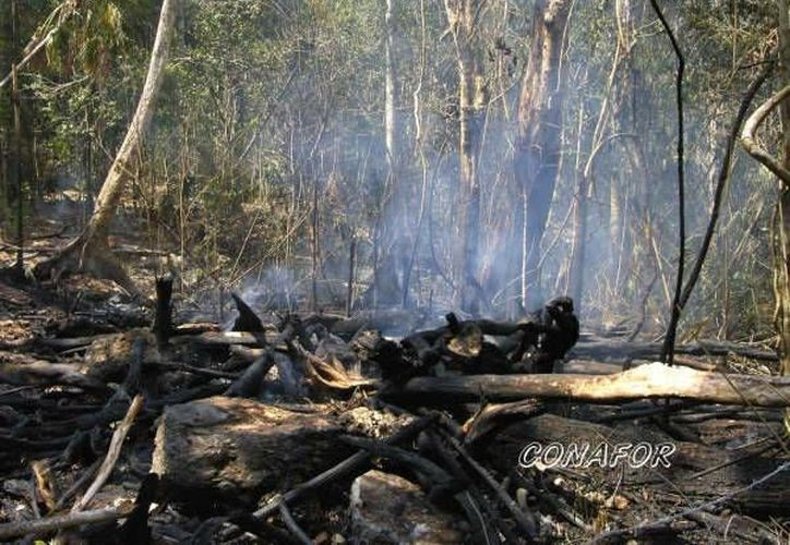 """La deflagración """"El Cocoyol"""" siniestro un total de 450 hectáreas de selva baja. (Omar Capistrán/SIPSE)"""