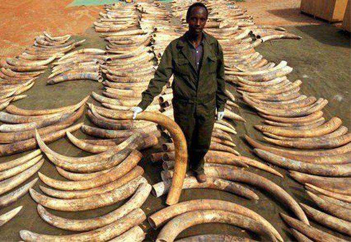 Se han comenzado a ver los efectos de la caza ilegal. (Foto: Internet)