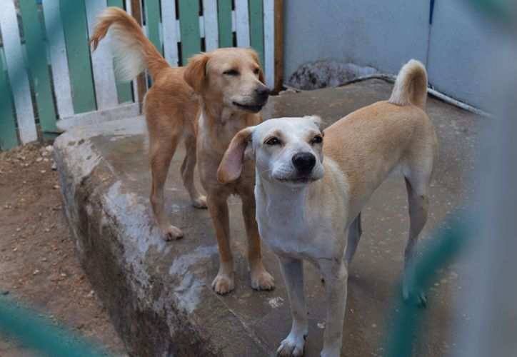 En el albergue que se mantiene con donaciones, viven 18 perritos que antes eran callejeros. Foto: Gustavo Villegas