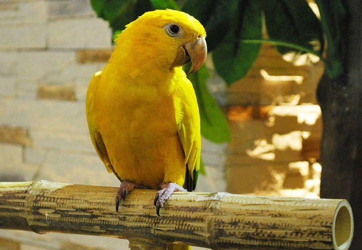 Loro parece estar conmovido y sufriendo por la muerte de su compañero, un ave de la misma especie. (RT)